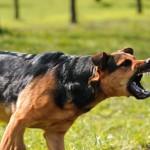 Hur kan man få hundar att sluta skälla?