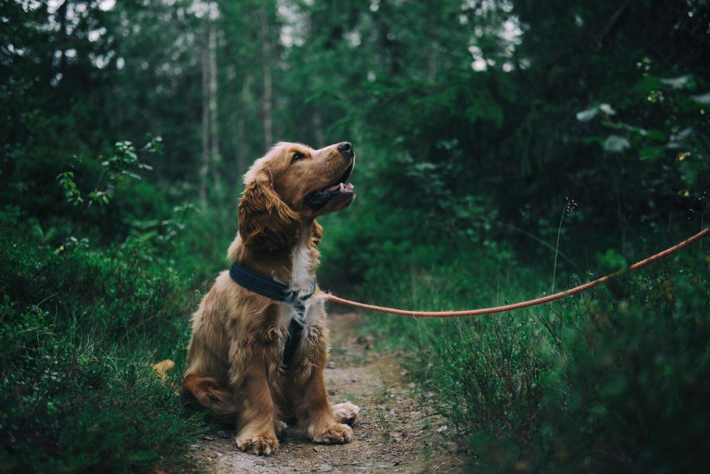 Hur hittar man en försäkring för sin hund